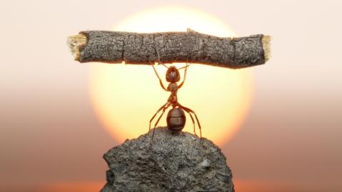 Strong-Ant-3.jpg